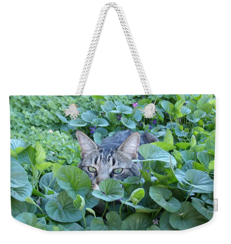 David S Reynolds Weekender Tote Bag featuring the photograph Keeping An Eye On You by David S Reynolds