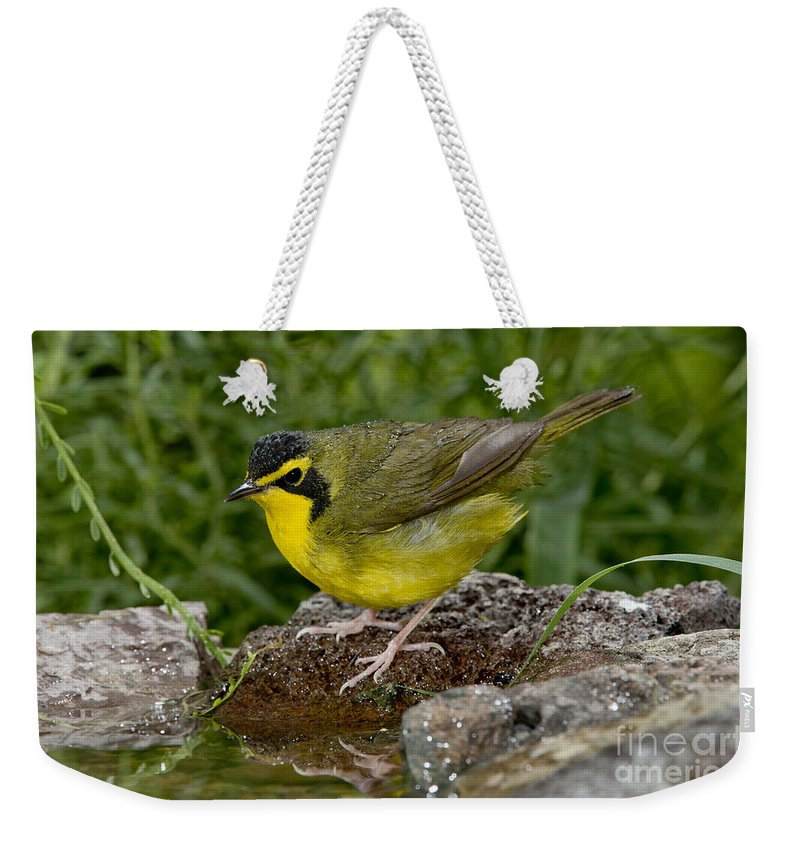 Kentucky Warbler Weekender Tote Bag featuring the photograph Kentucky Warbler by Anthony Mercieca