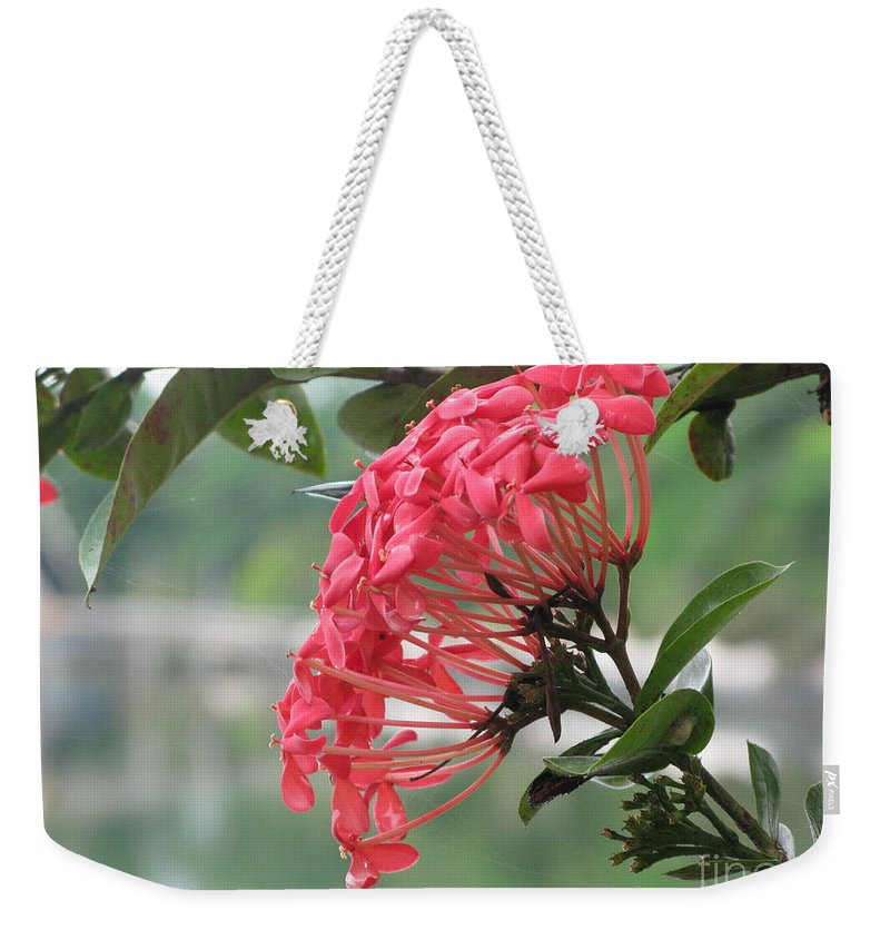 Pink Weekender Tote Bag featuring the photograph Kerala Beauty by Mini Arora