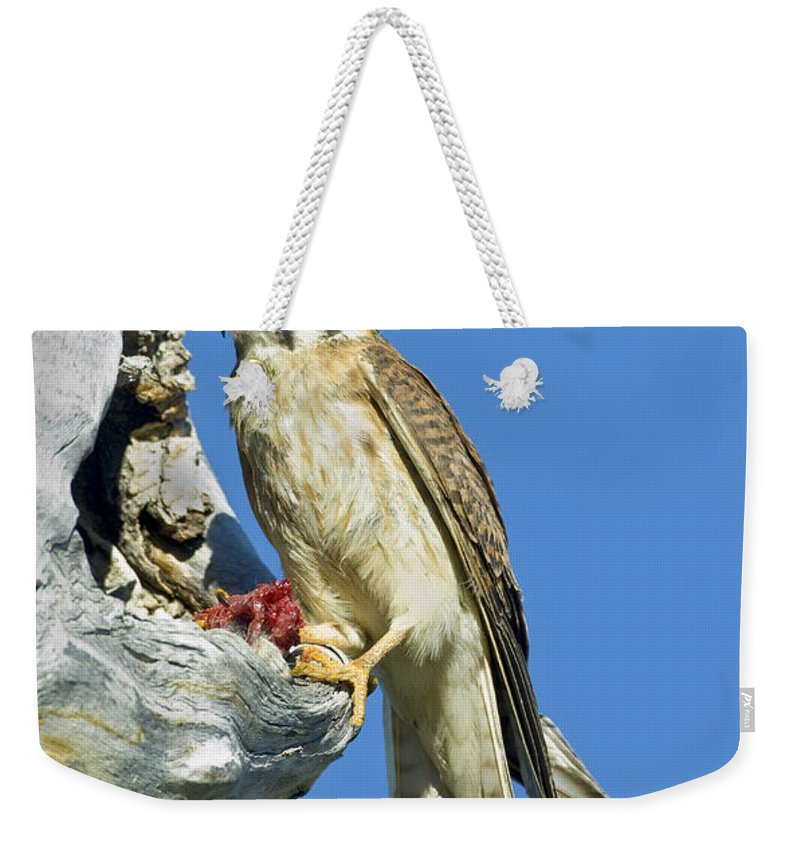 Fauna Weekender Tote Bag featuring the photograph Kestrel At Nest by Anthony Mercieca
