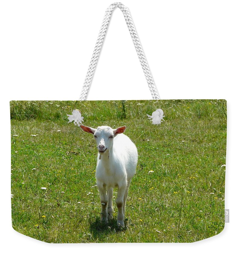 Kid Weekender Tote Bag featuring the photograph Kid Goat by Valerie Ornstein
