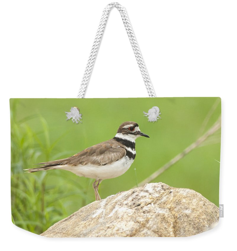 Bird Weekender Tote Bag featuring the photograph Kildeer by Richard Kitchen
