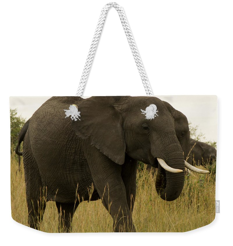 Elephant Weekender Tote Bag featuring the photograph King by Amy Warr