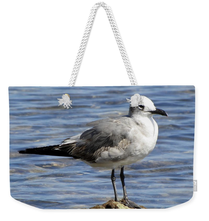Water Weekender Tote Bag featuring the photograph King Of The Rock Seagull by Bob Slitzan