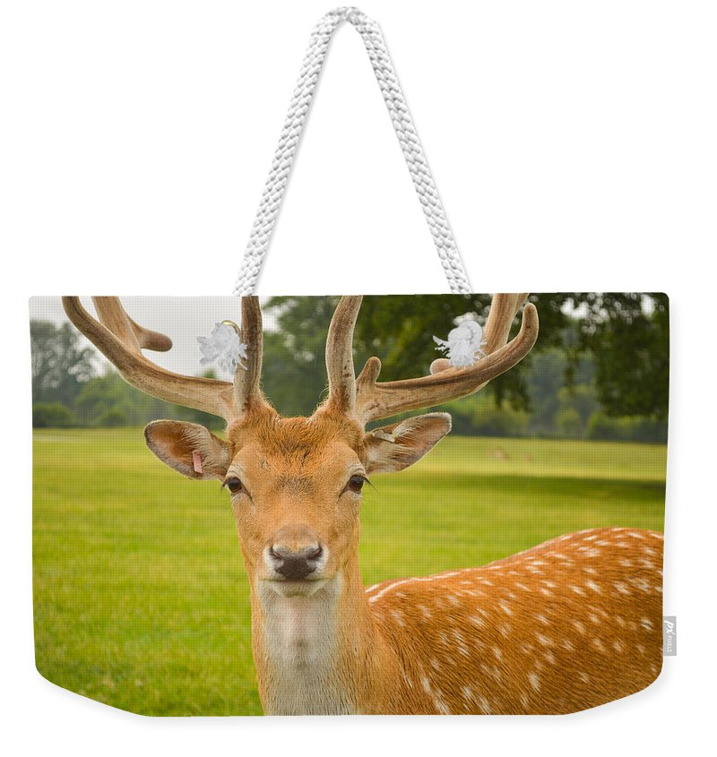 Deer Weekender Tote Bag featuring the photograph King Of The Spotted Deers by Mair Hunt