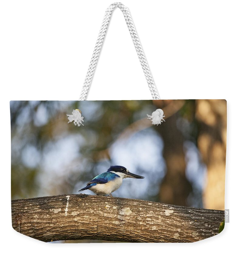 Kingfisher Weekender Tote Bag featuring the photograph Kingfisher-top-end Australia by Douglas Barnard