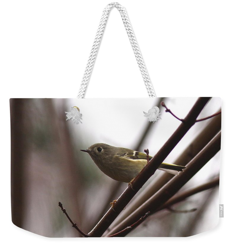 Bird Weekender Tote Bag featuring the photograph Kinglet by Travis Truelove
