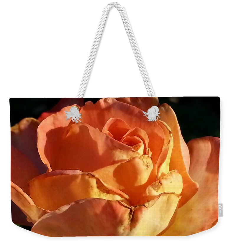 Sun Lit Rose Weekender Tote Bag featuring the photograph Kiss Of The Sun by Caryl J Bohn