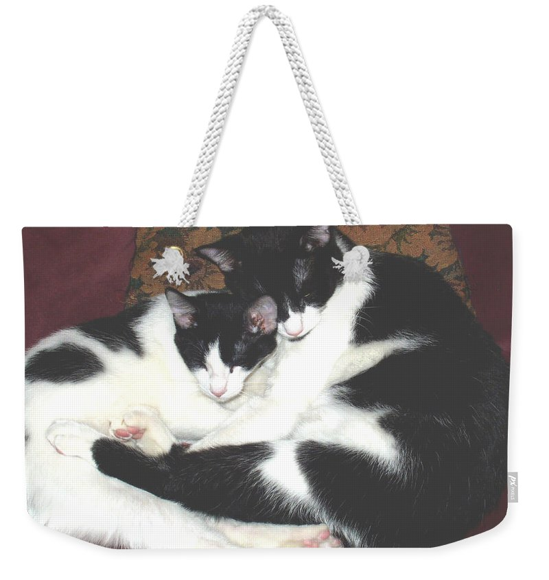 Brothers Weekender Tote Bag featuring the photograph Kitty Love by Marna Edwards Flavell