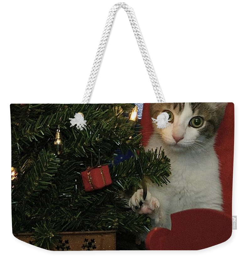 Animals Weekender Tote Bag featuring the photograph Kitty Says Happy Holidays by Thomas Woolworth
