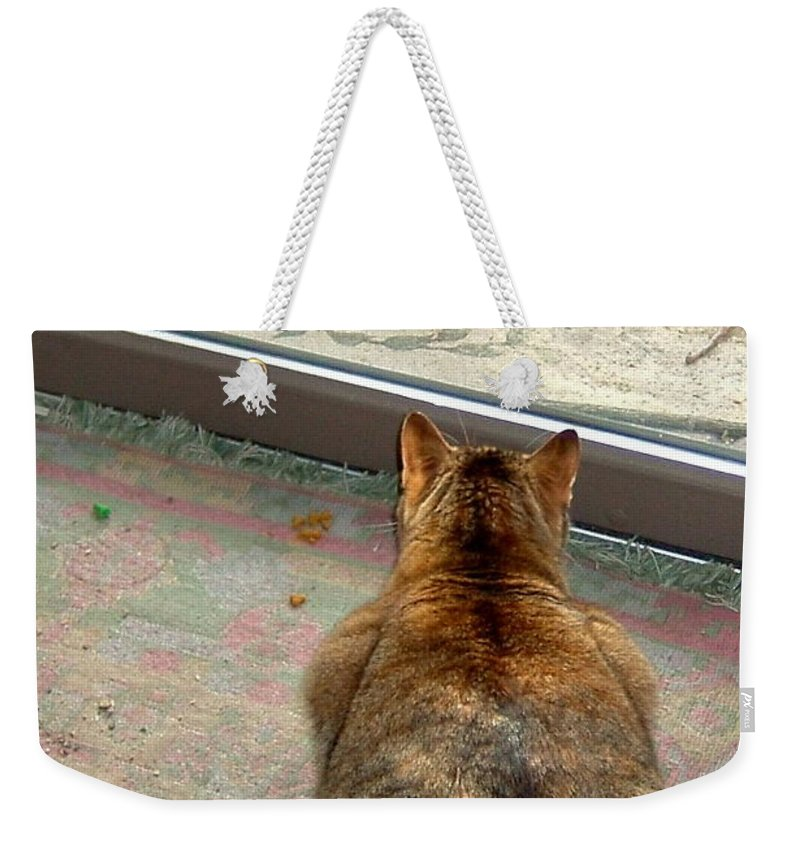 Squirrel Weekender Tote Bag featuring the photograph Kitty Watches The Squirrel by Susan Wyman
