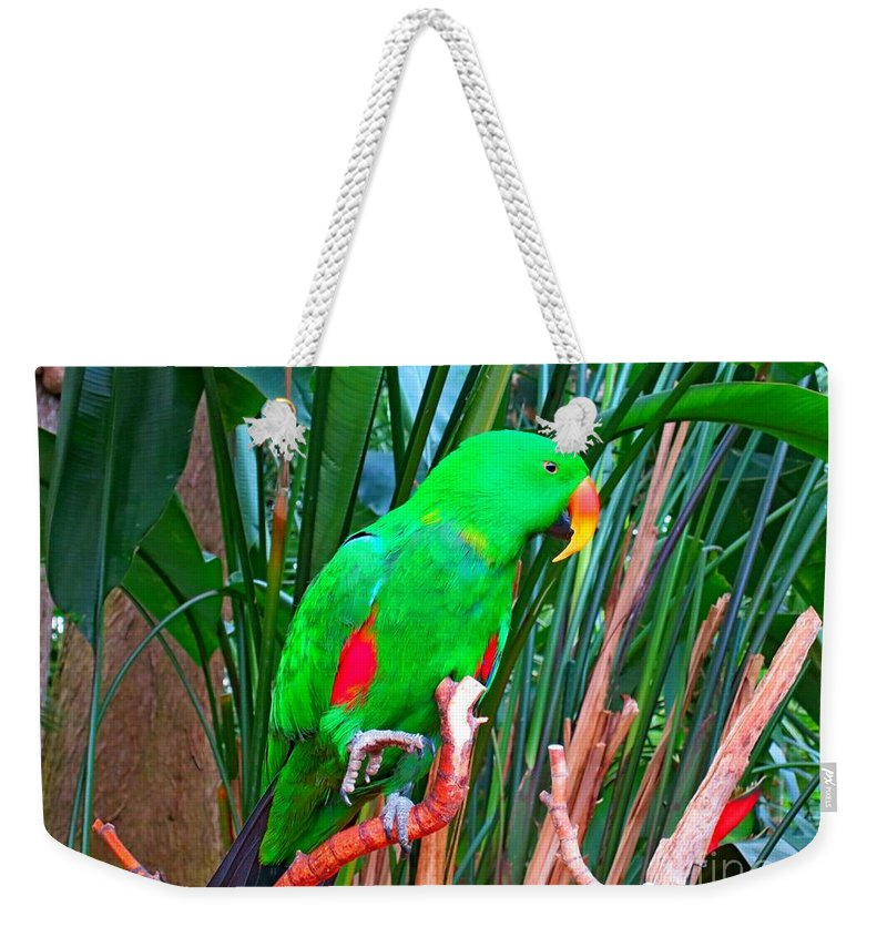 Parrot Weekender Tote Bag featuring the photograph Kiwi by Lena Photo Art