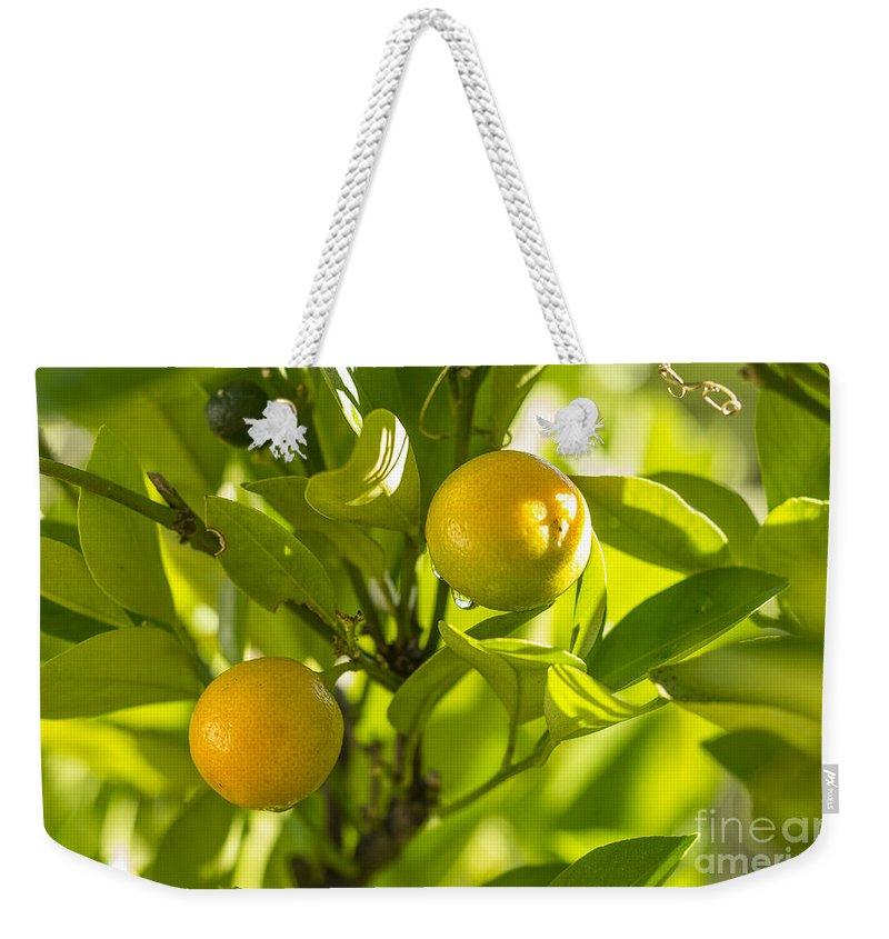 Australia Weekender Tote Bag featuring the photograph Kumquats by Steven Ralser