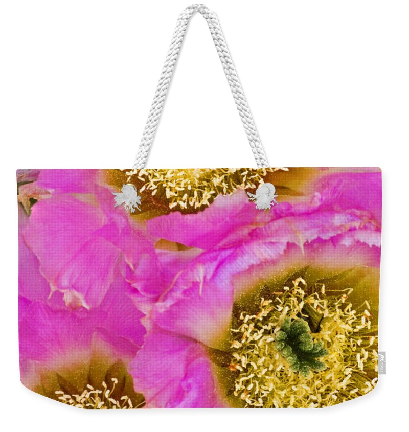 Lace Cactus Weekender Tote Bag featuring the photograph Lace Cactus Flowers by Dave Welling