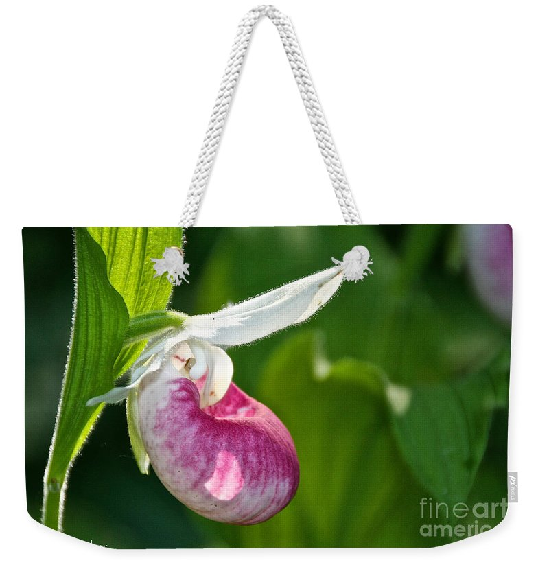 Flower Weekender Tote Bag featuring the photograph Lady Slipper Illuminated by Susan Herber