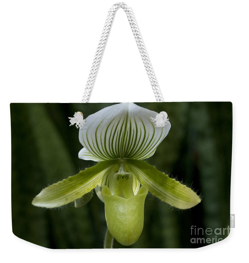 Lady Slipper Weekender Tote Bag featuring the photograph Lady Slipper Orchid by Meg Rousher