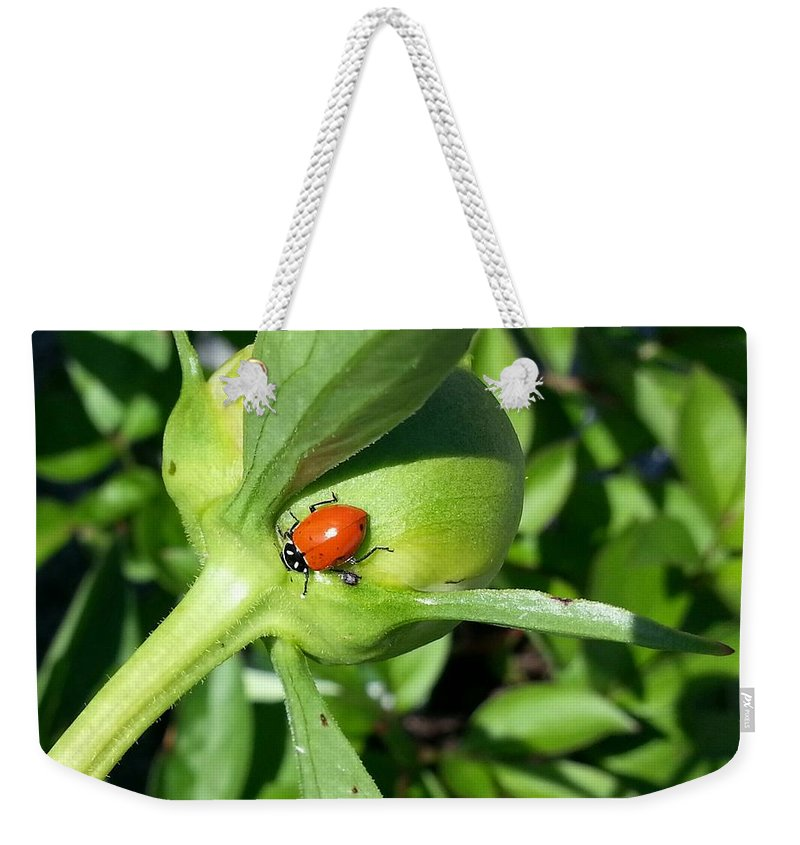 Macro Weekender Tote Bag featuring the photograph Ladybug Ladybug by Caryl J Bohn