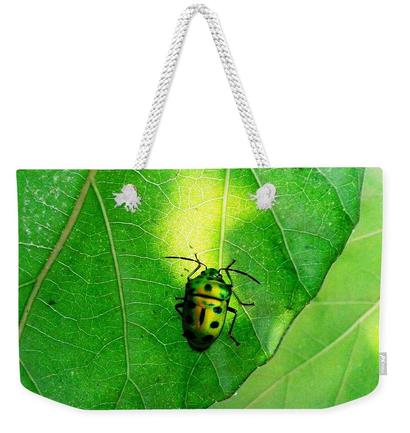 Ladybug Weekender Tote Bag featuring the photograph Ladybug by Ramabhadran Thirupattur