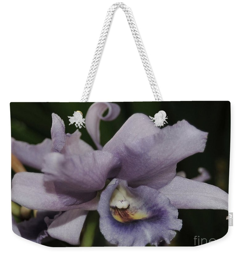 Orchid Weekender Tote Bag featuring the photograph Laeliocattleya Blue Boy 2 Of 2 by Terri Winkler