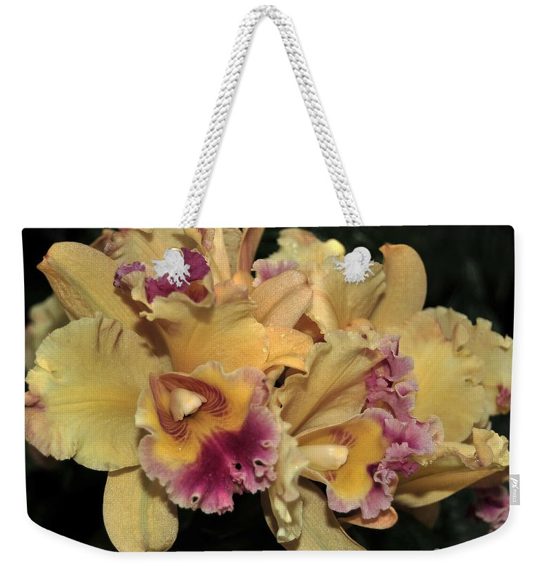 Orchid Weekender Tote Bag featuring the photograph Laeliocattleya Lydia Hubbell by Terri Winkler