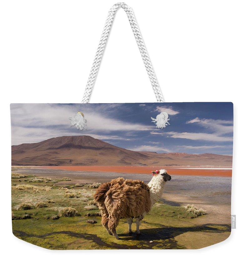 Scenics Weekender Tote Bag featuring the photograph Laguna Colorado Lake With Llama by John Elk