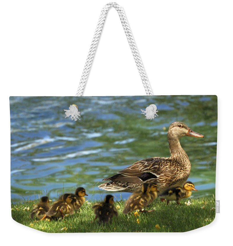 Ducks Weekender Tote Bag featuring the photograph Lakeside Stroll 9836 by Jerry Sodorff
