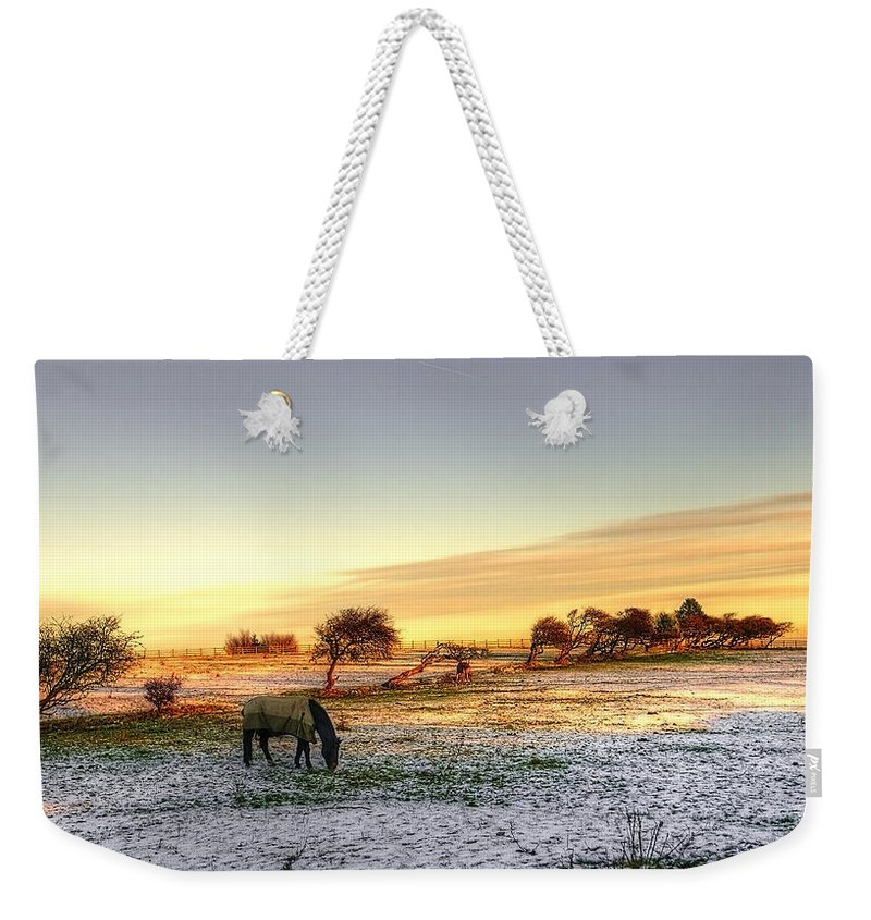Tree Weekender Tote Bag featuring the photograph Landscape And Horse by Svetlana Sewell