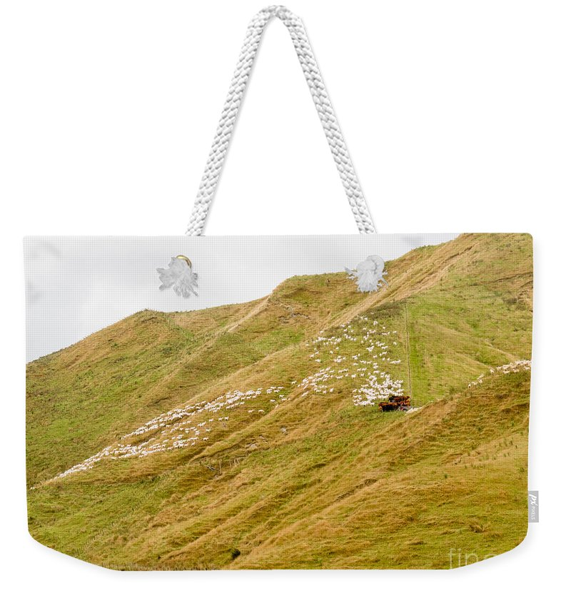 Agriculture Weekender Tote Bag featuring the photograph Large Flock Of Herded Sheep On A Steep Hillside by Stephan Pietzko