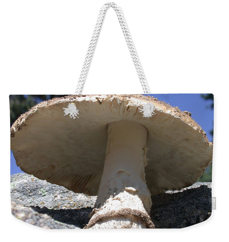 Large Mushroom Weekender Tote Bag featuring the photograph Large Mushroom by Shane Bechler