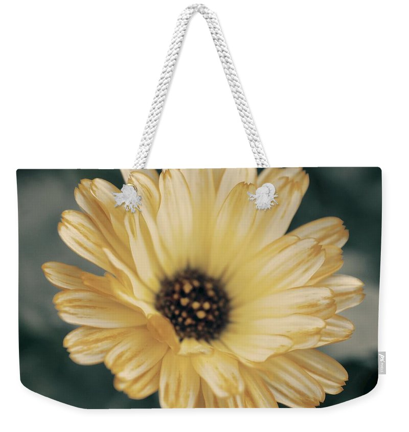 Matt Matekovic Weekender Tote Bag featuring the photograph Late Bloomer by Photographic Arts And Design Studio