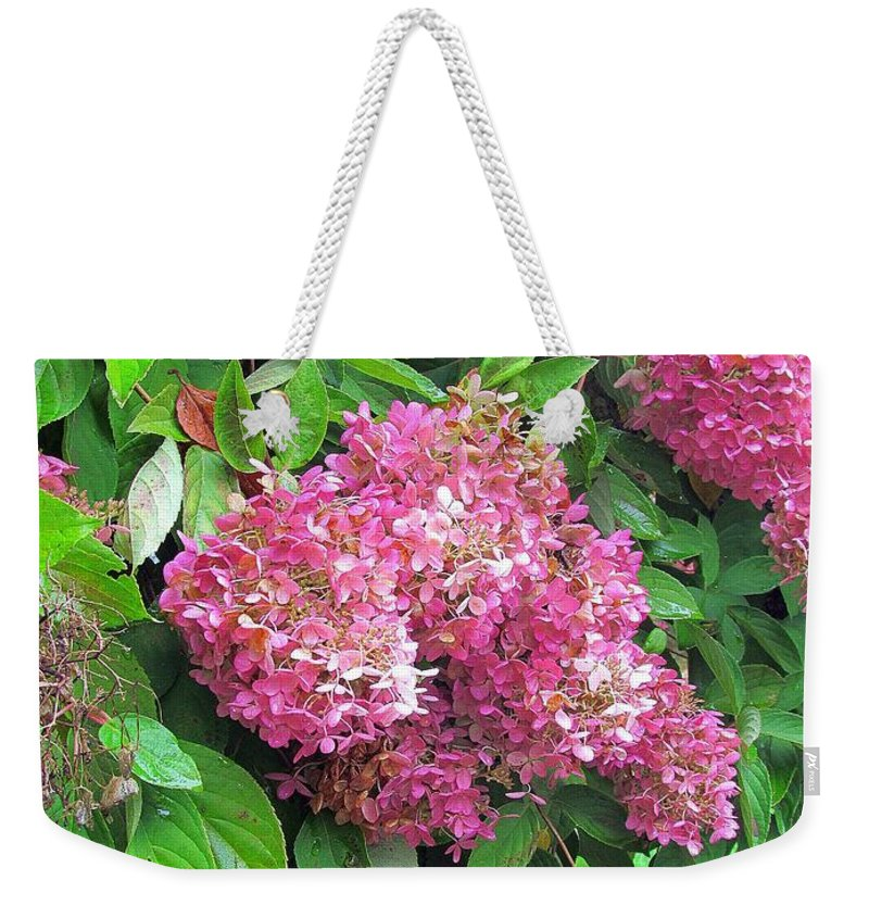 Hydrangea Weekender Tote Bag featuring the photograph Late Hydrangea Flower by Elizabeth Dow