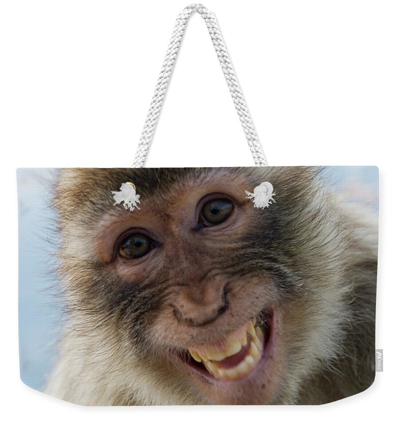 Alertness Weekender Tote Bag featuring the photograph Laughing Gibraltar Ape Barbary Macaque by Holger Leue