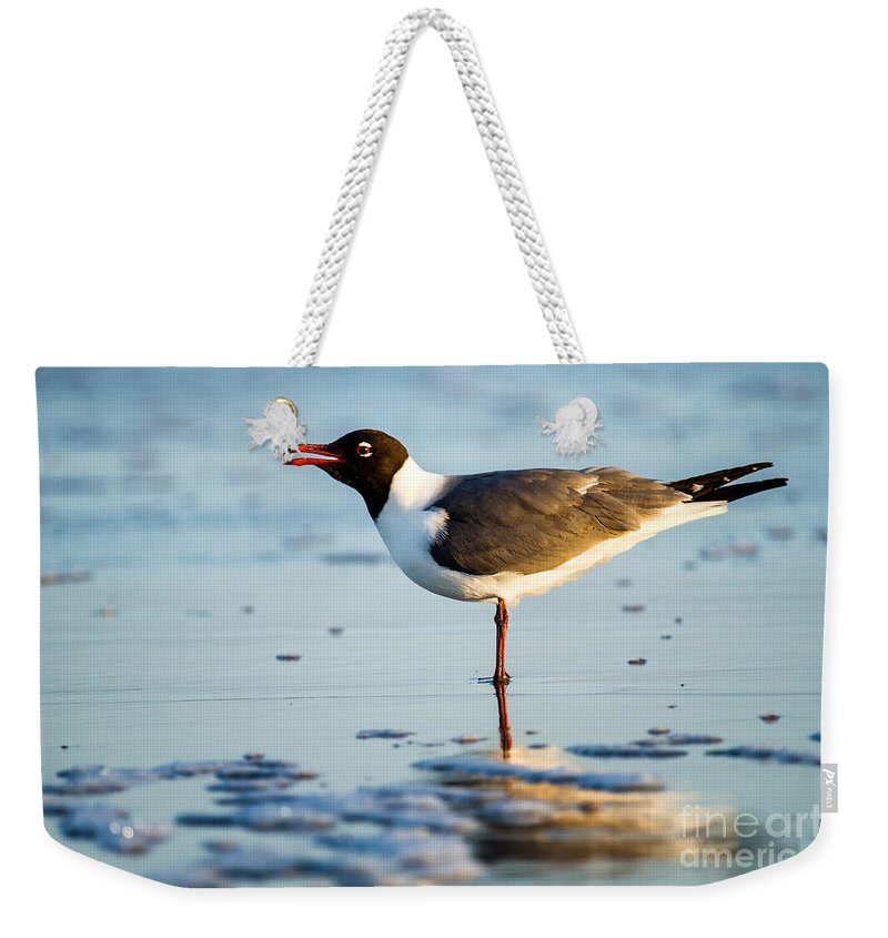 Lauging Gull On The Beach Weekender Tote Bag featuring the photograph Laughing Gull On The Beach At Fort Clinch State Park Florida by Dawna Moore Photography