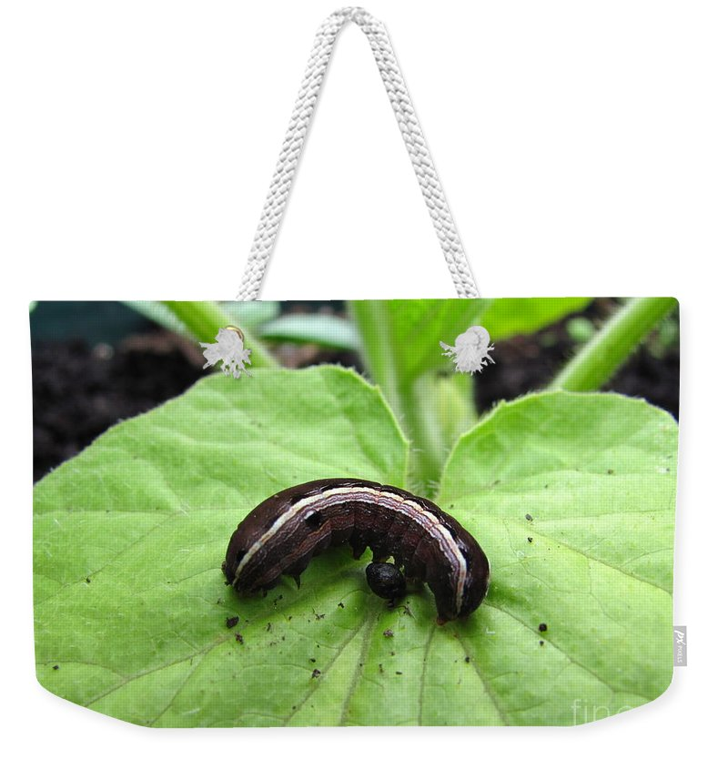 Lavender And Cream Caterpillar Prints Purple Caterpillar Prints Colorful Caterpillar Prints Bird Dropping Mimic Caterpillar Images Entomology Biodiversity Conservation Forest Ecology Intelligent Design Nature Critter Prints Insects Weekender Tote Bag featuring the photograph Lavender And Cream by Joshua Bales