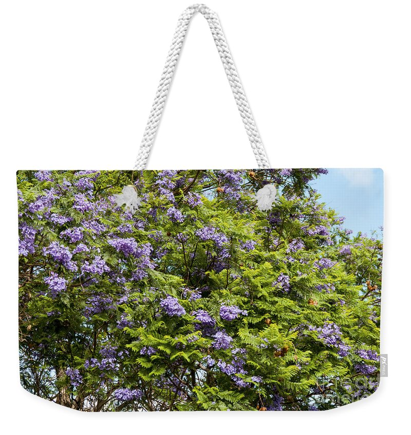 Lavender-colored Blossoms Jacaranda Mimosifolia Tree Haleakala Highway East Maui Hawaii Nature Bloom Blooms Blossom Blossoms Weekender Tote Bag featuring the photograph Lavender-colored Blooming Tree by Bob Phillips