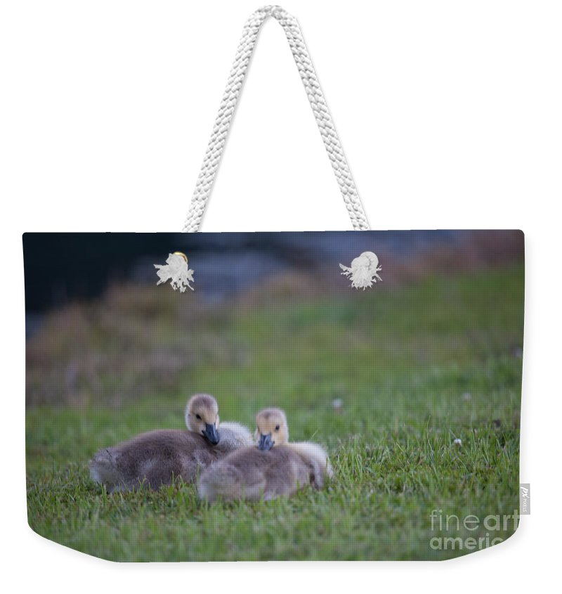 Gosling Weekender Tote Bag featuring the photograph Laying Down by Dale Powell