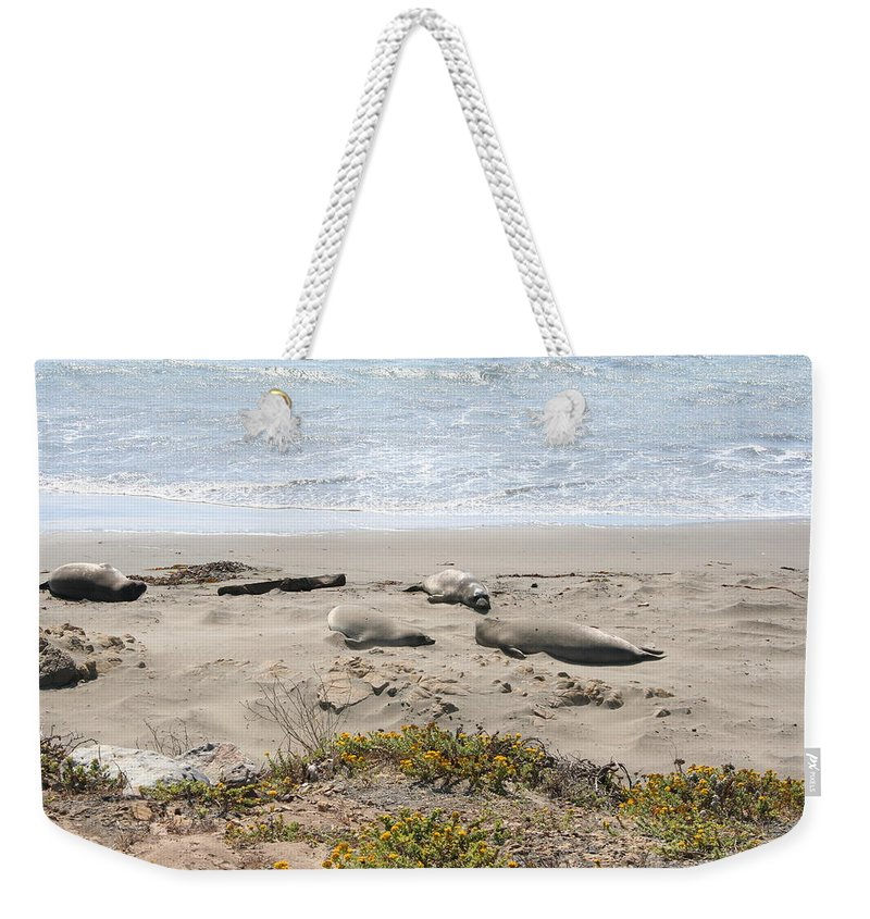 Beach Weekender Tote Bag featuring the photograph Lazy Seals by Christiane Schulze Art And Photography