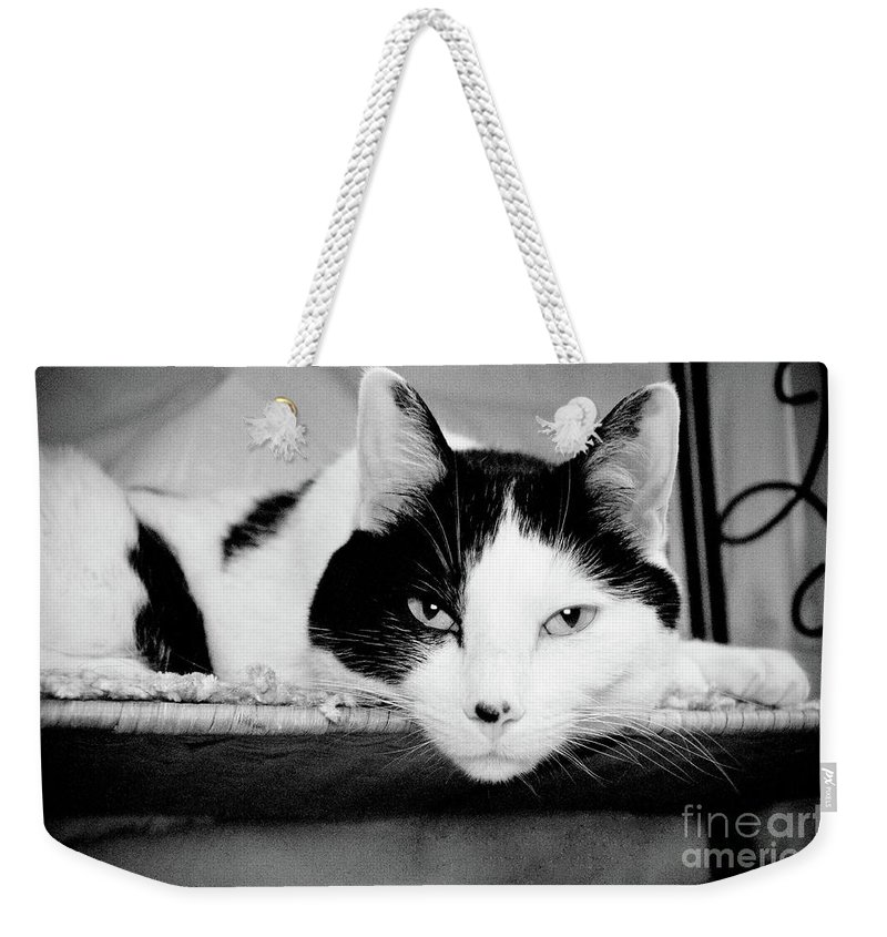 Andee Design Cat Weekender Tote Bag featuring the photograph Le Cat by Andee Design