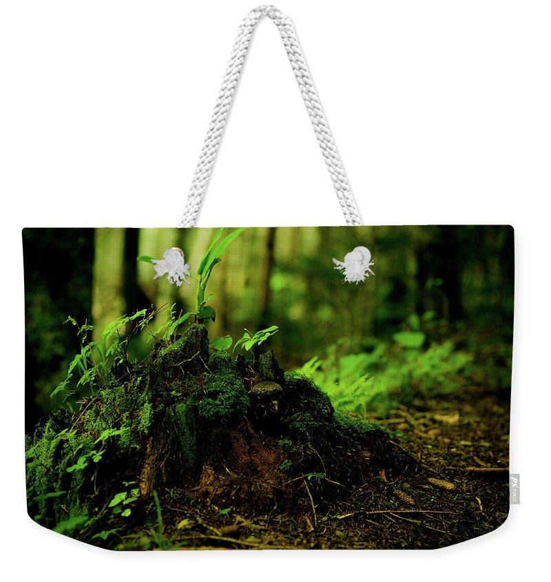 Hokkaido Weekender Tote Bag featuring the photograph Leaf Bud by Plasticboystudio