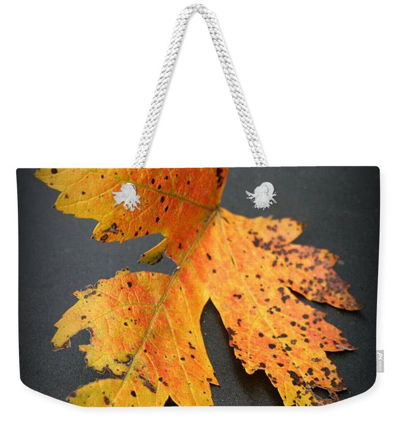 Nature Weekender Tote Bag featuring the photograph Leaf Portrait by Linda Sannuti