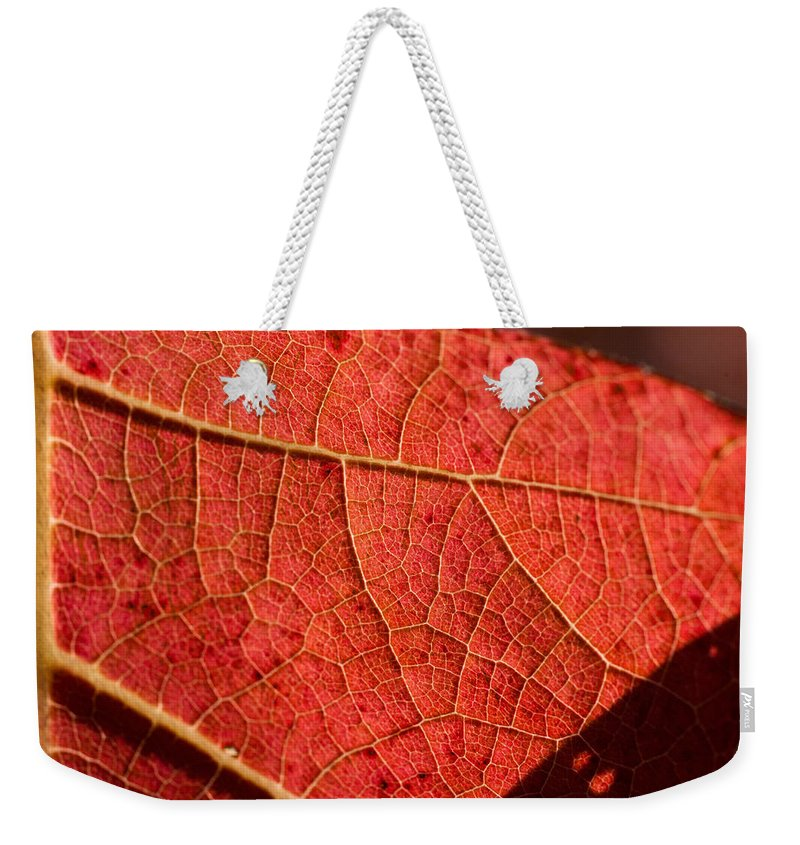 Leaf Weekender Tote Bag featuring the photograph Leaf Venation Pattern 1 by Douglas Barnett