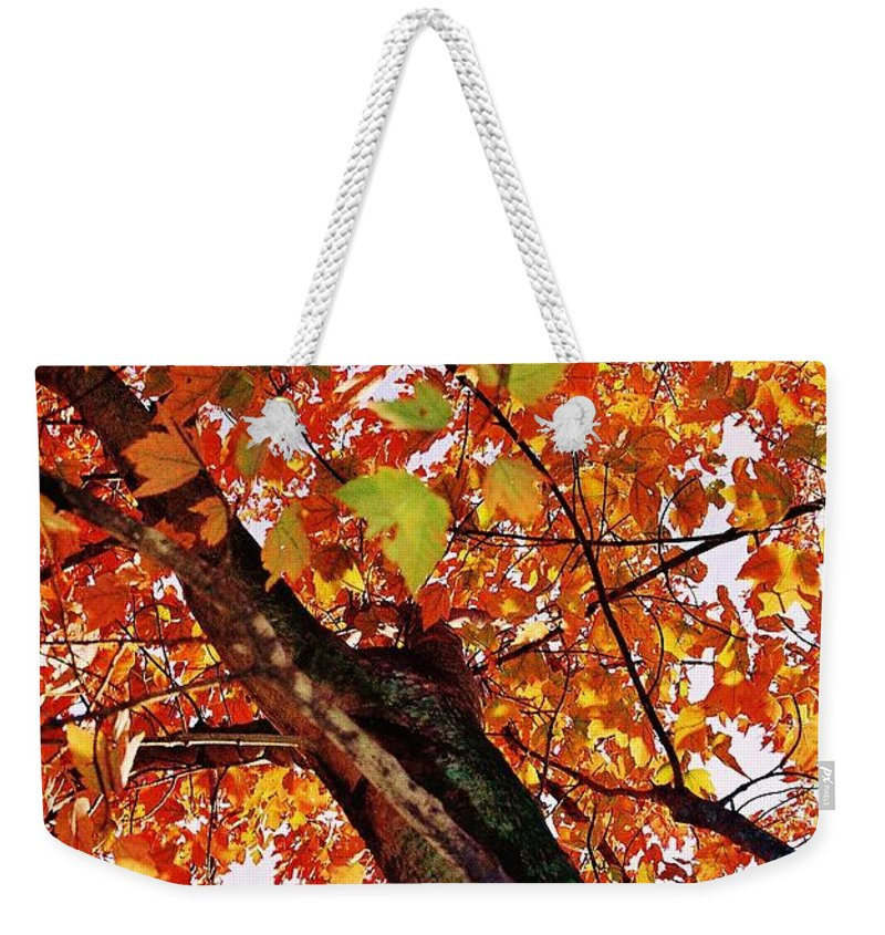 Leafward Weekender Tote Bag featuring the photograph Leafward by Daniel Thompson