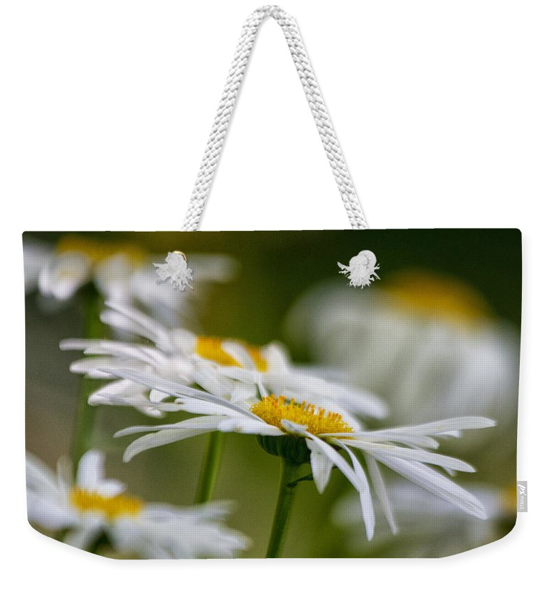 Flowers Weekender Tote Bag featuring the photograph Leaning Towards The Light by Robert Woodward