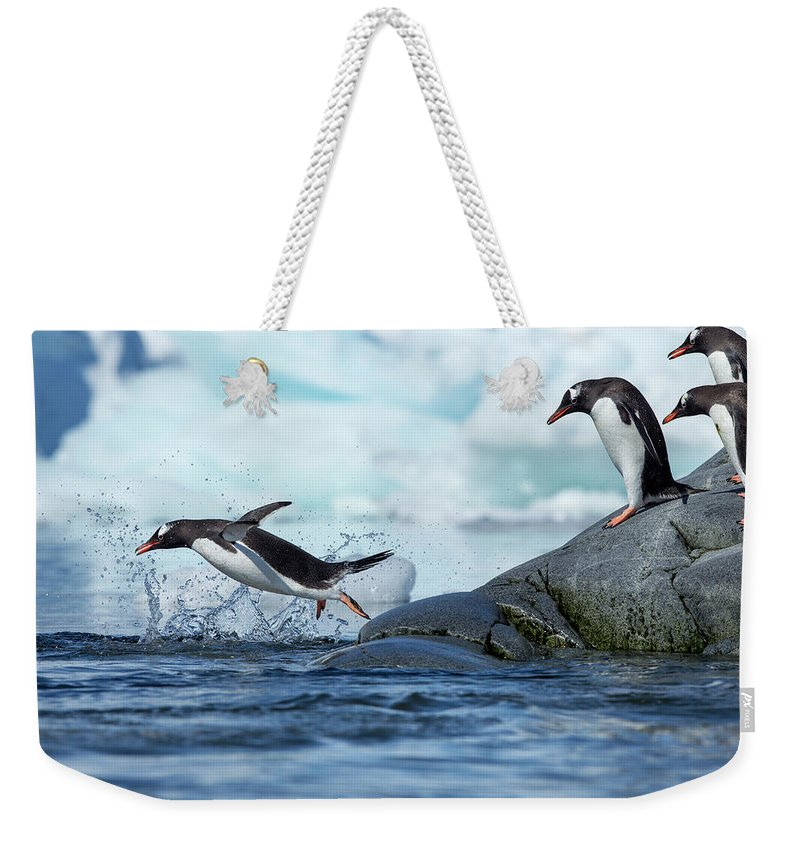Water's Edge Weekender Tote Bag featuring the photograph Leaping Gentoo Penguins, Antarctica by Paul Souders
