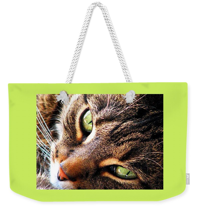 Cats Weekender Tote Bag featuring the photograph Learn To Linger by Angela Davies