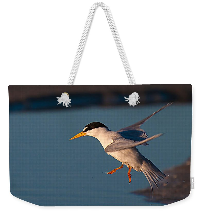 Least Weekender Tote Bag featuring the photograph Least Tern In Flight by Photos By Cassandra