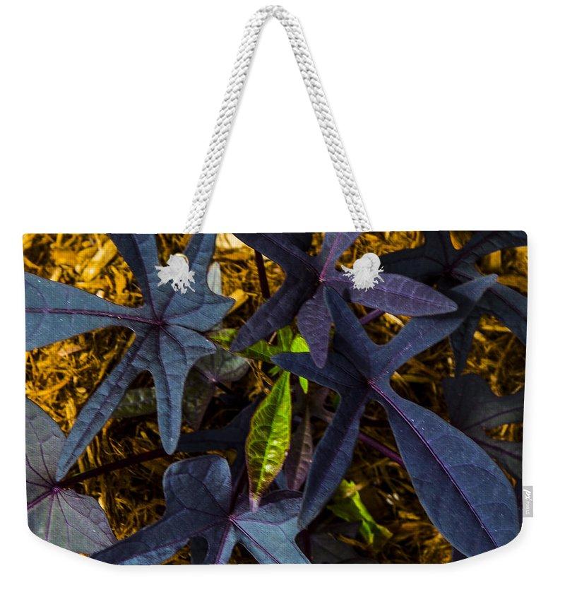 Random Weekender Tote Bag featuring the photograph Leaves by Angus Hooper Iii