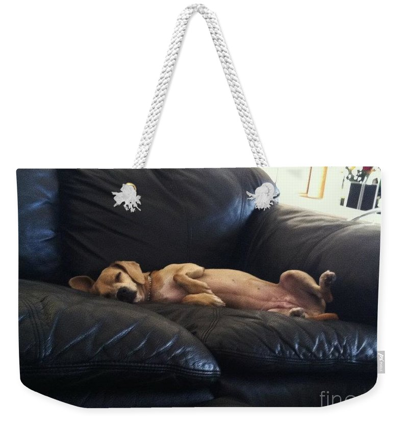Princess Betty Biscuits Weekender Tote Bag featuring the photograph Leg Up by Angela J Wright
