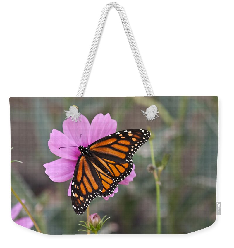Horizontal Weekender Tote Bag featuring the photograph Legend Of The Butterfly - Monarch Butterfly - Casper Wyoming by Diane Mintle