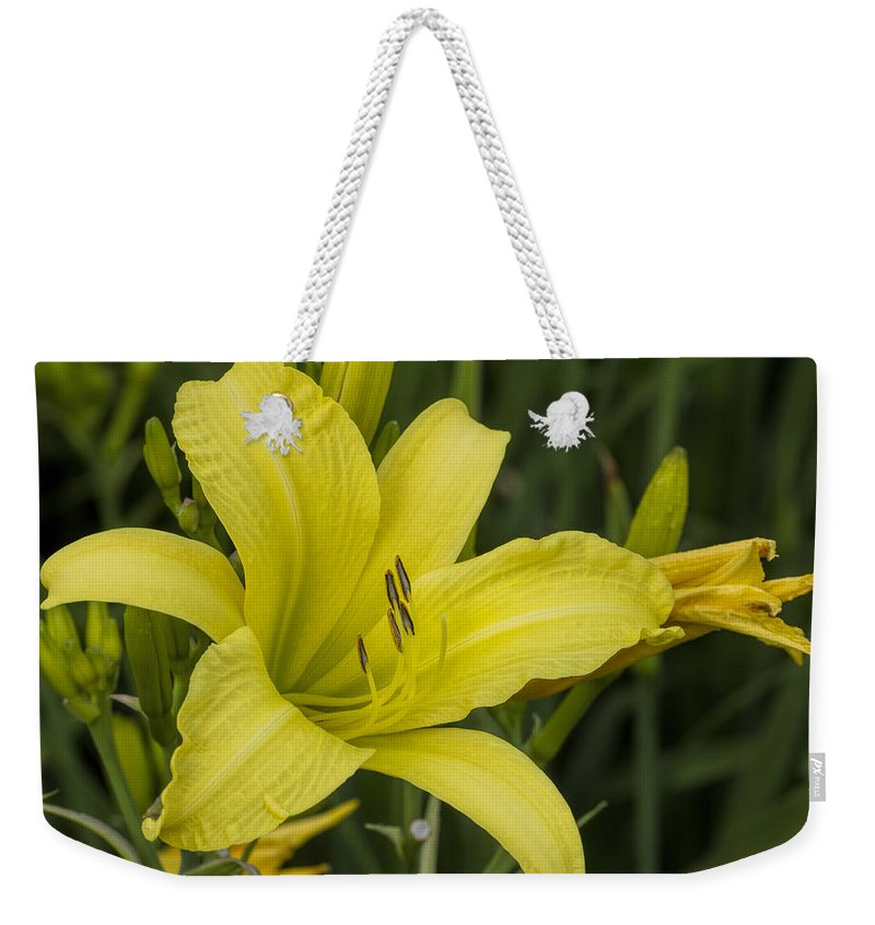 Hemerocallis Weekender Tote Bag featuring the photograph Lemon Yellow Daylily Blossom by Kathy Clark